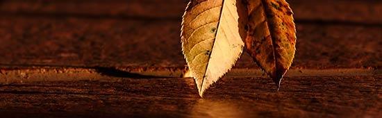Herbstdepression-Tips für die dunkle Jahreszeit